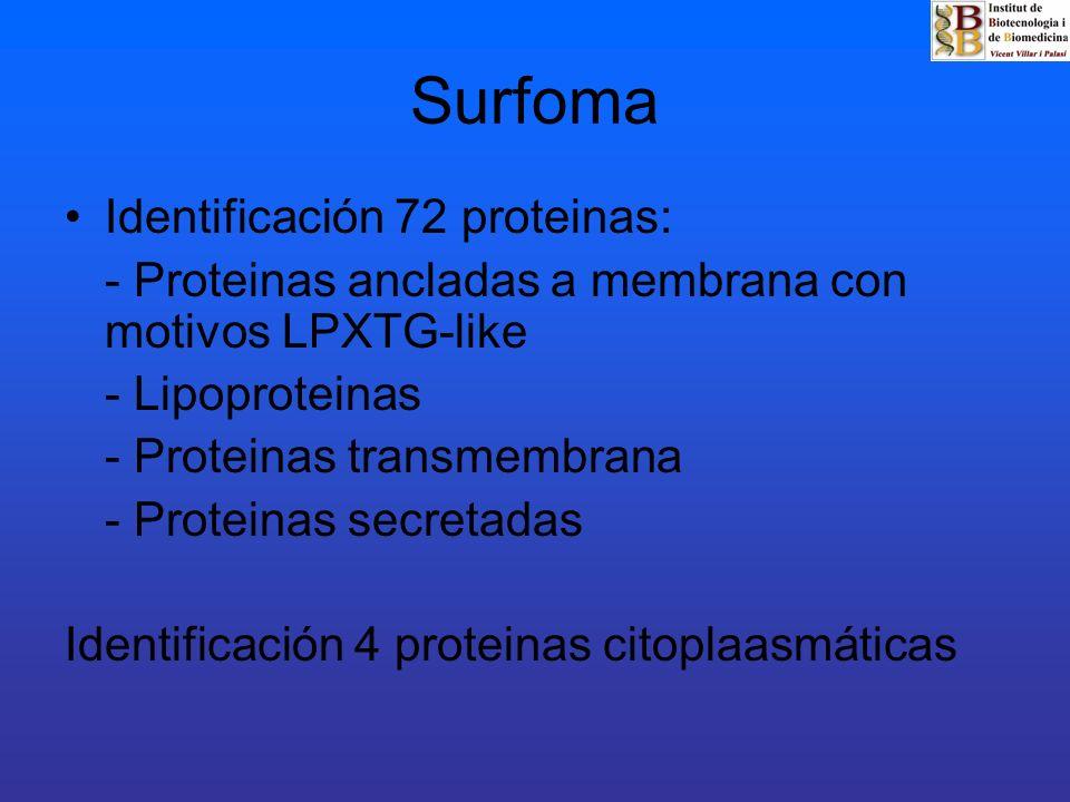 Identificación 72 proteinas: - Proteinas ancladas a membrana con motivos LPXTG-like - Lipoproteinas - Proteinas transmembrana - Proteinas secretadas I