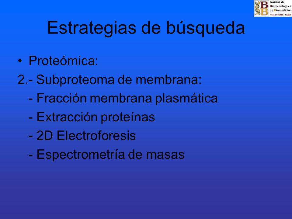 Estrategias de búsqueda Proteómica: 2.- Subproteoma de membrana: - Fracción membrana plasmática - Extracción proteínas - 2D Electroforesis - Espectrom