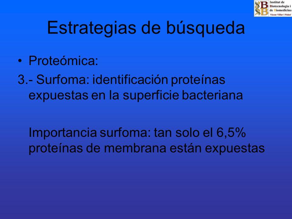 Estrategias de búsqueda Proteómica: 3.- Surfoma: identificación proteínas expuestas en la superficie bacteriana Importancia surfoma: tan solo el 6,5%
