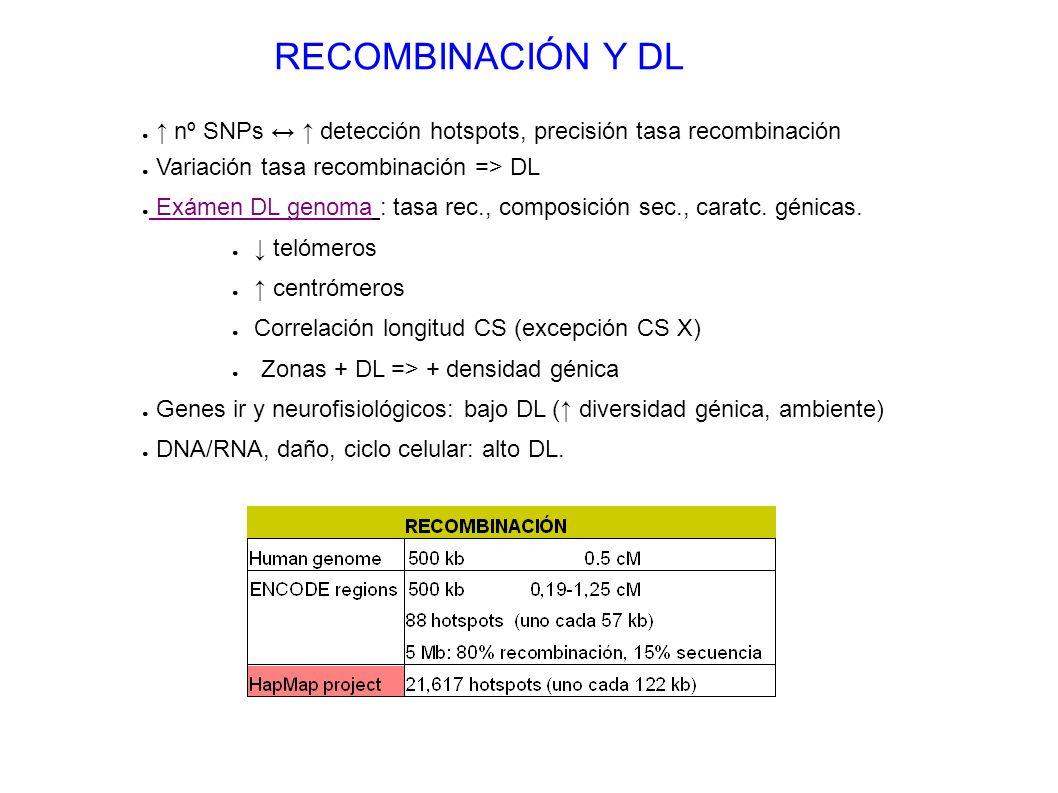 RECOMBINACIÓN Y DL nº SNPs detección hotspots, precisión tasa recombinación Variación tasa recombinación => DL Exámen DL genoma : tasa rec., composici