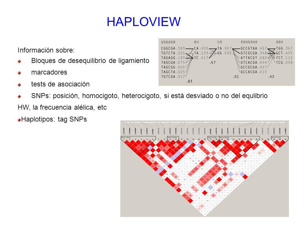 HAPLOVIEW Información sobre: Bloques de desequilibrio de ligamiento marcadores tests de asociación SNPs: posición, homocigoto, heterocigoto, si está d
