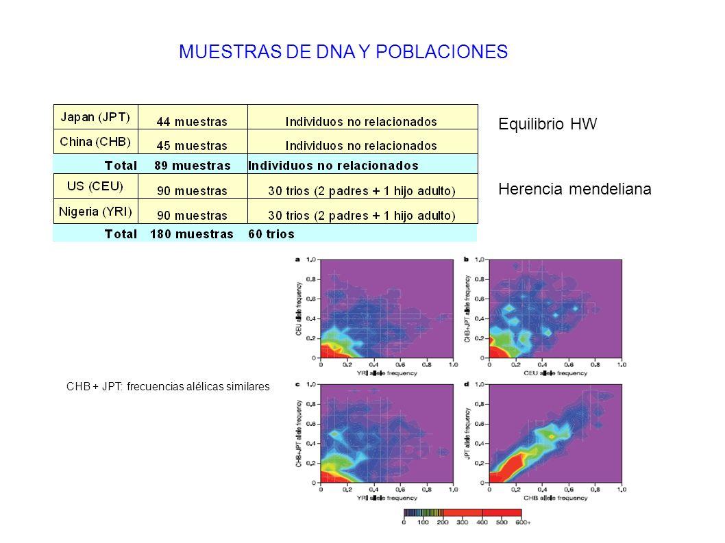 MUESTRAS DE DNA Y POBLACIONES CHB + JPT: frecuencias alélicas similares Equilibrio HW Herencia mendeliana