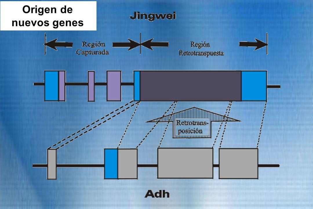 Origen de nuevos genes Origen de nuevos genes