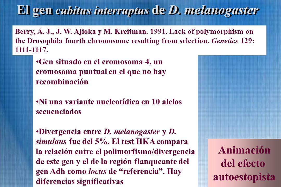 El gen cubitus interruptus de D. melanogaster Berry, A. J., J. W. Ajioka y M. Kreitman Berry, A. J., J. W. Ajioka y M. Kreitman. 1991. Lack of polymor