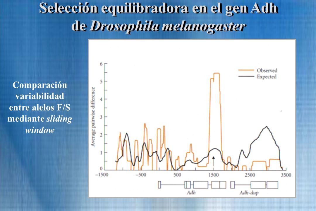 Selección equilibradora en el gen Adh de Drosophila melanogaster Comparación variabilidad entre alelos F/S mediante sliding window