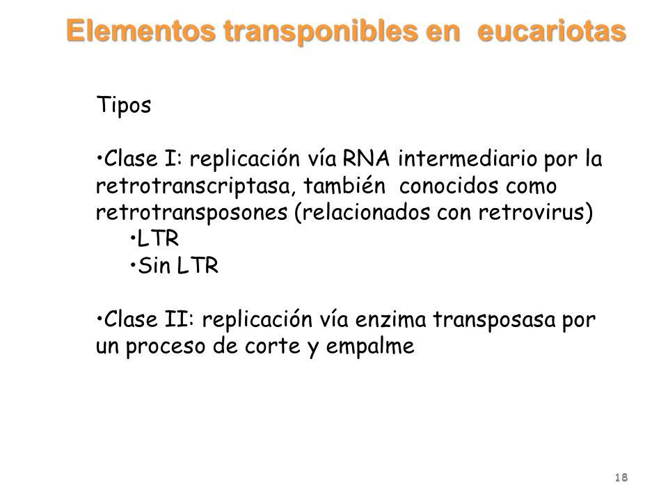 Tipos Clase I: replicación vía RNA intermediario por la retrotranscriptasa, también conocidos como retrotransposones (relacionados con retrovirus) LTR