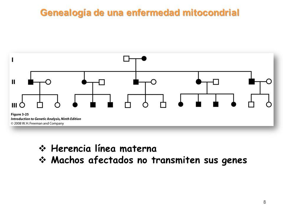Genealogía de una enfermedad mitocondrial 8 Herencia línea materna Machos afectados no transmiten sus genes