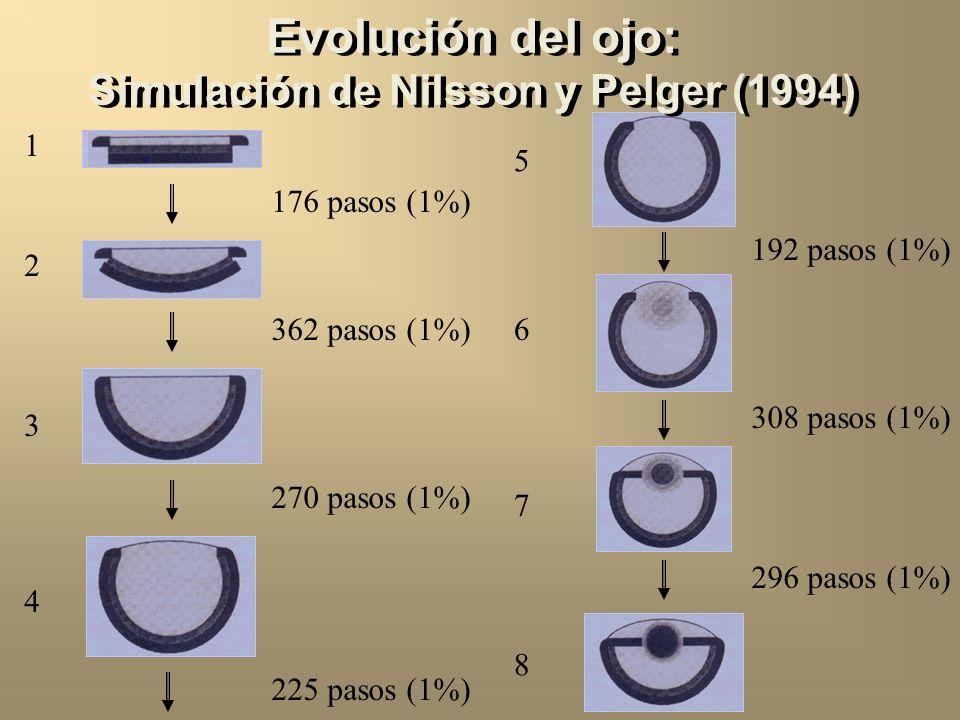 Evolución del ojo: Simulación de Nilsson y Pelger (1994) 1 176 pasos (1%) 2 3 362 pasos (1%) 4 270 pasos (1%) 225 pasos (1%) 5 192 pasos (1%) 6 7 308