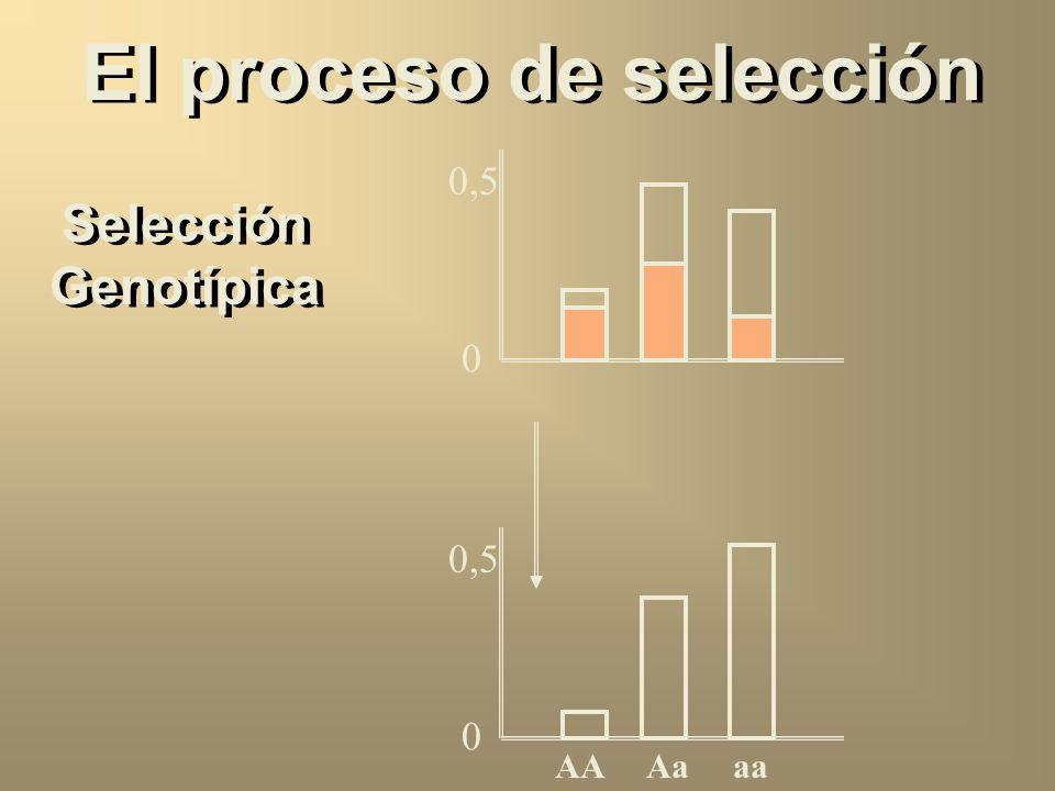 El proceso de selección Selección fenotípica XX