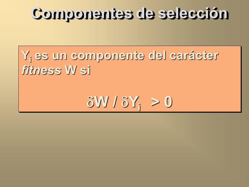 Componentes de selección (Bundgaard & Christiansen 1972) Componentes de selección (Bundgaard & Christiansen 1972) A i Gametos A i Gametos A i * A j *
