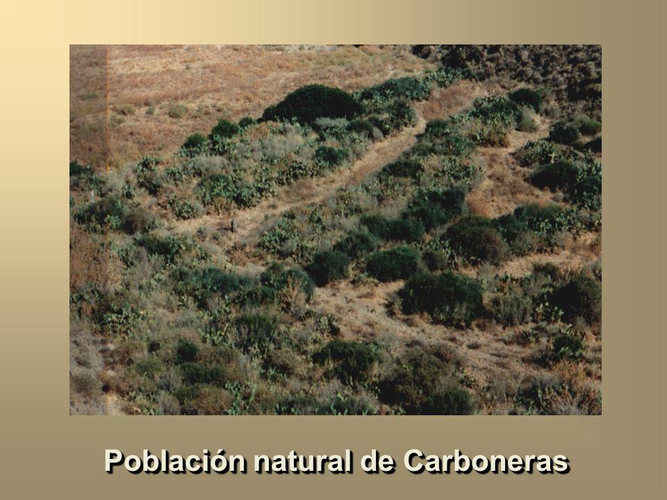 Patrón de apareamientos y éxito en el apareamiento Barbadilla, Ruiz, Santos y Fontdevila. 1994. Evolution 48: 767-780 Patrón de apareamientos y éxito