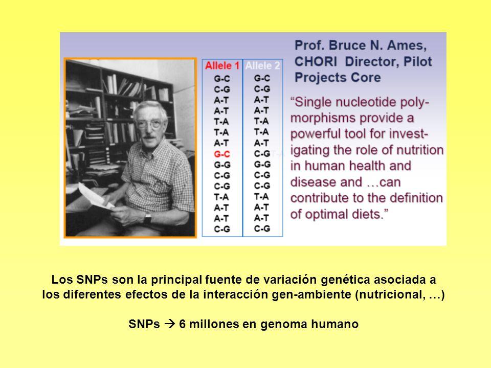 Los SNPs son la principal fuente de variación genética asociada a los diferentes efectos de la interacción gen-ambiente (nutricional, …) SNPs 6 millon