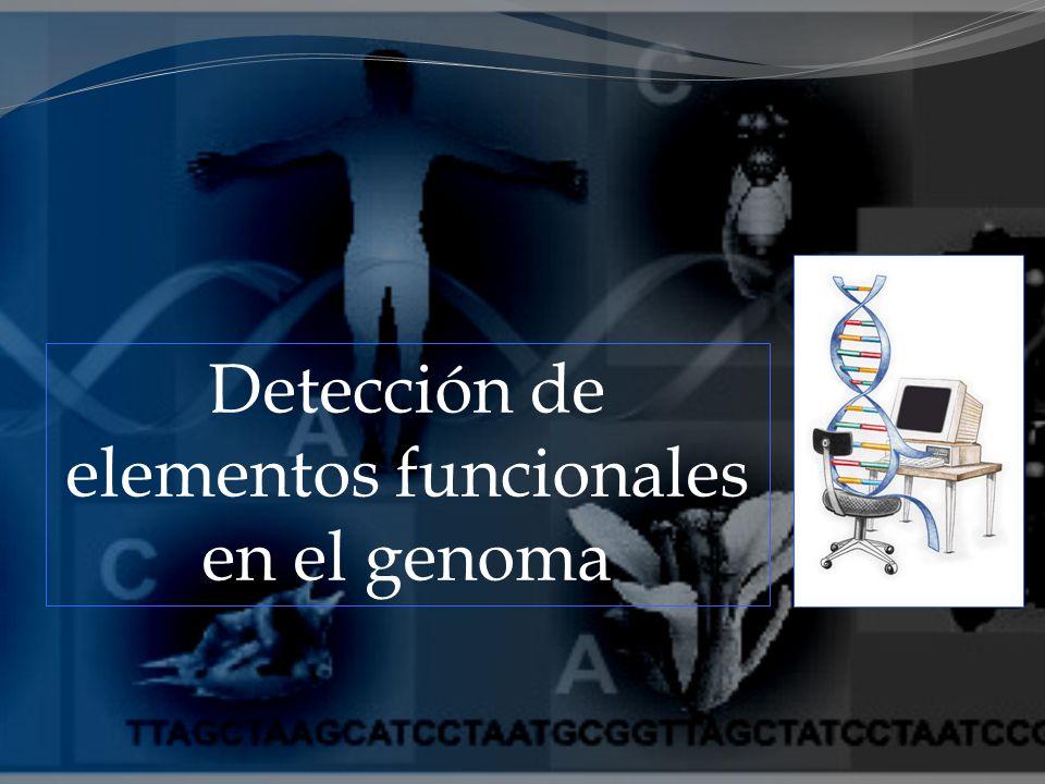 Detección de elementos funcionales en el genoma