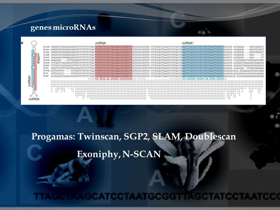 Exoniphy, N-SCAN Progamas: Twinscan, SGP2, SLAM, Doublescan genes microRNAs