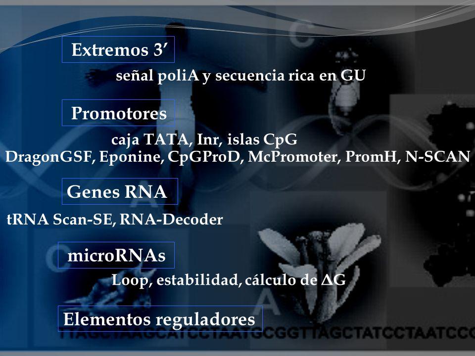 Genes RNA Elementos reguladores microRNAs Extremos 3 Promotores señal poliA y secuencia rica en GU caja TATA, Inr, islas CpG DragonGSF, Eponine, CpGPr