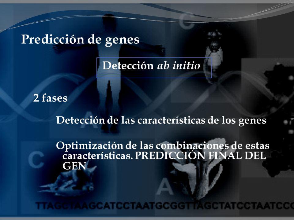 Predicción de genes 2 fases Detección de las características de los genes Optimización de las combinaciones de estas características. PREDICCIÓN FINAL