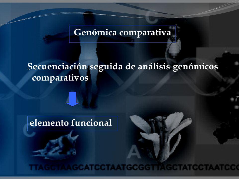 Genómica comparativa Secuenciación seguida de análisis genómicos comparativos elemento funcional