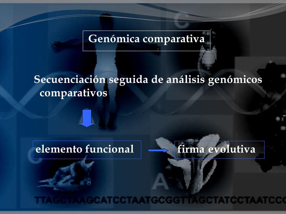 Genómica comparativa Secuenciación seguida de análisis genómicos comparativos elemento funcional firma evolutiva