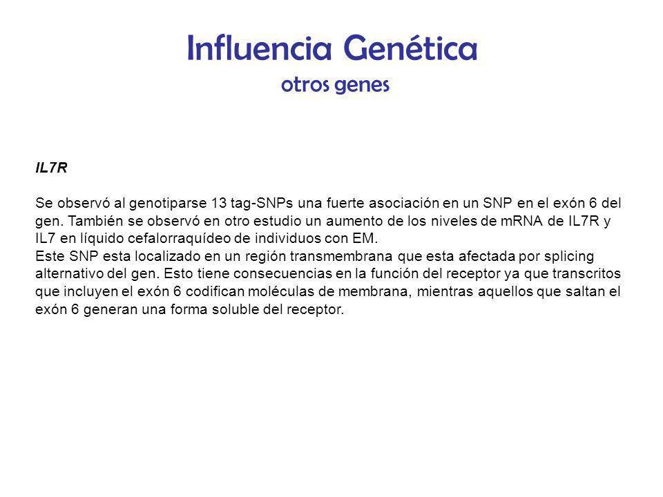 Influencia Genética otros genes IL7R Se observó al genotiparse 13 tag-SNPs una fuerte asociación en un SNP en el exón 6 del gen. También se observó en