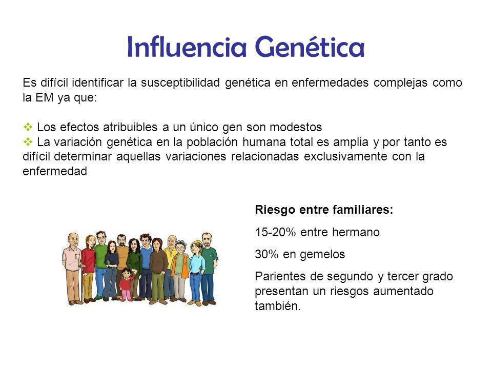 Influencia Genética Es difícil identificar la susceptibilidad genética en enfermedades complejas como la EM ya que: Los efectos atribuibles a un único