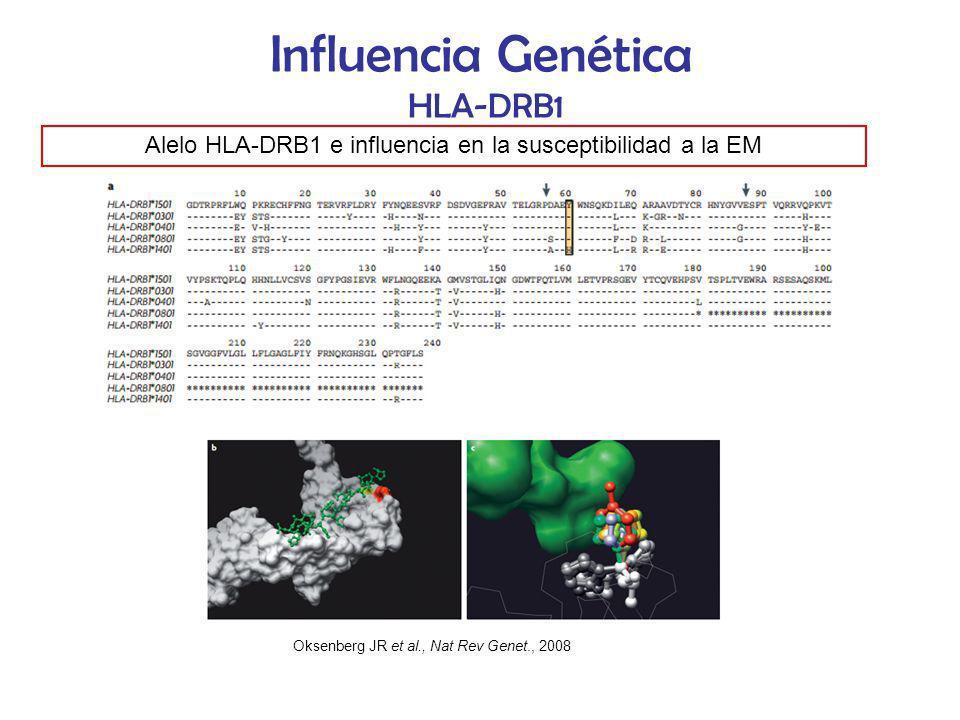 Influencia Genética HLA-DRB1 Alelo HLA-DRB1 e influencia en la susceptibilidad a la EM Oksenberg JR et al., Nat Rev Genet., 2008