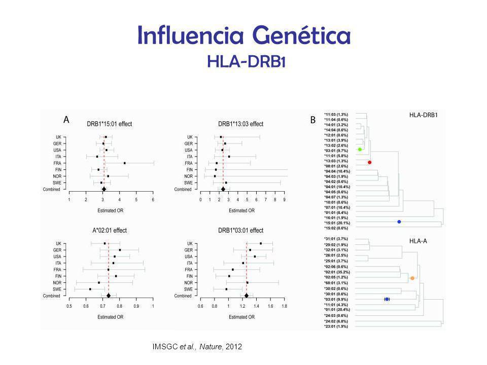 Influencia Genética HLA-DRB1 IMSGC et al., Nature, 2012