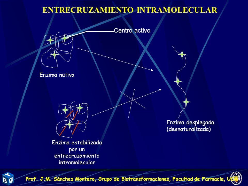 Centro activo Enzima nativa Enzima desplegada (desnaturalizada) Enzima estabilizada por un entrecruzamiento intramolecular ENTRECRUZAMIENTO INTRAMOLEC