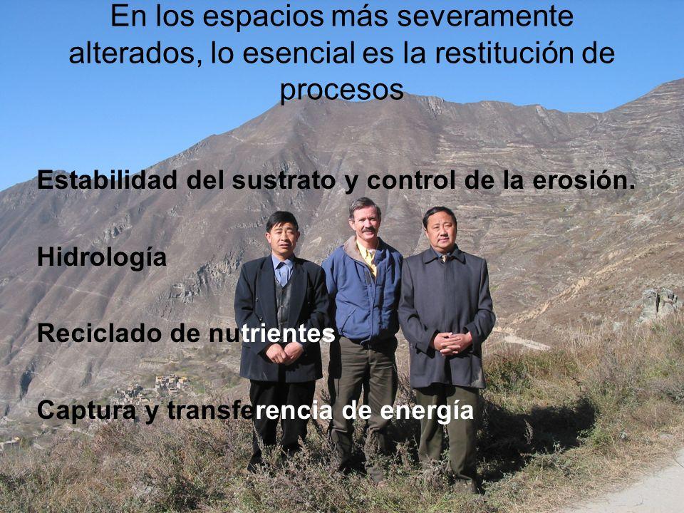 En los espacios más severamente alterados, lo esencial es la restitución de procesos Estabilidad del sustrato y control de la erosión. Hidrología Reci