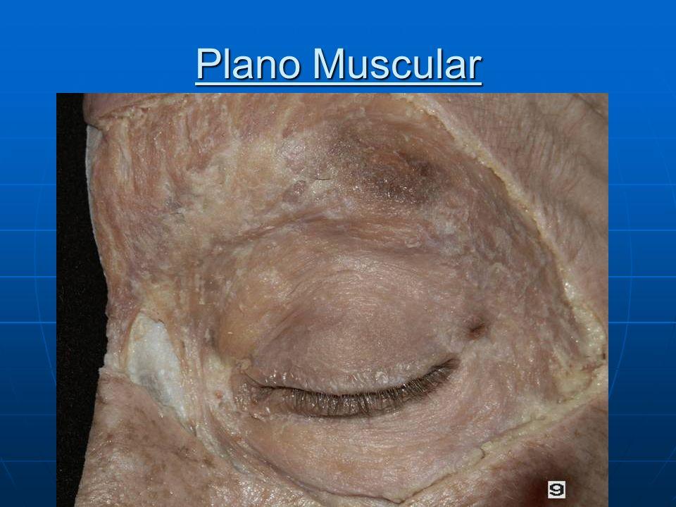 Plano Muscular