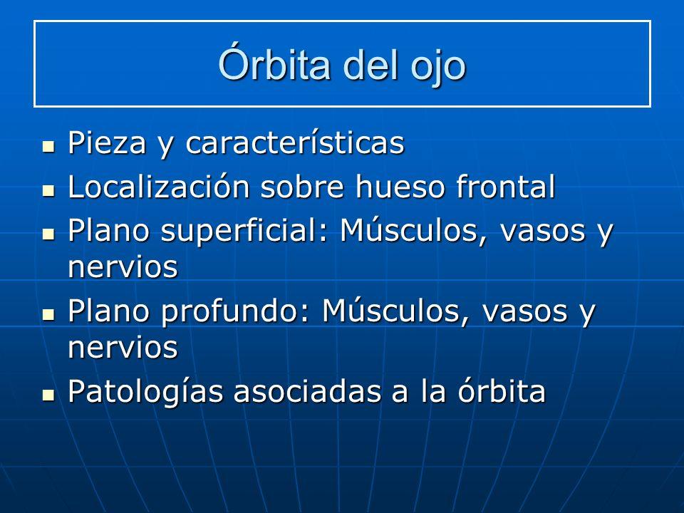 Órbita del ojo Pieza y características Pieza y características Localización sobre hueso frontal Localización sobre hueso frontal Plano superficial: Mú
