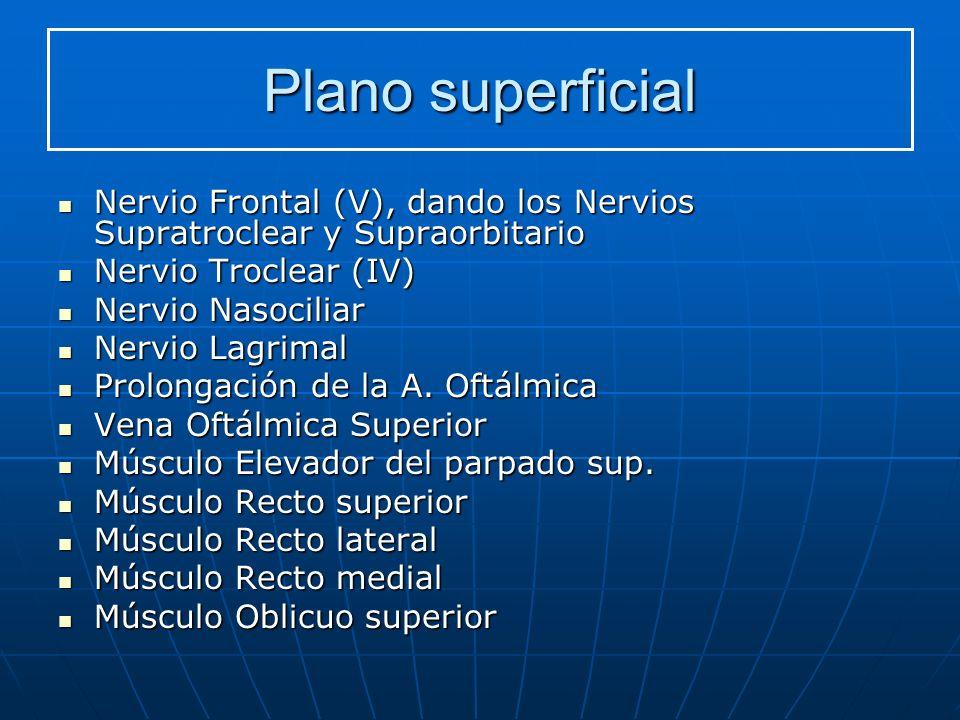 Plano superficial Nervio Frontal (V), dando los Nervios Supratroclear y Supraorbitario Nervio Frontal (V), dando los Nervios Supratroclear y Supraorbi