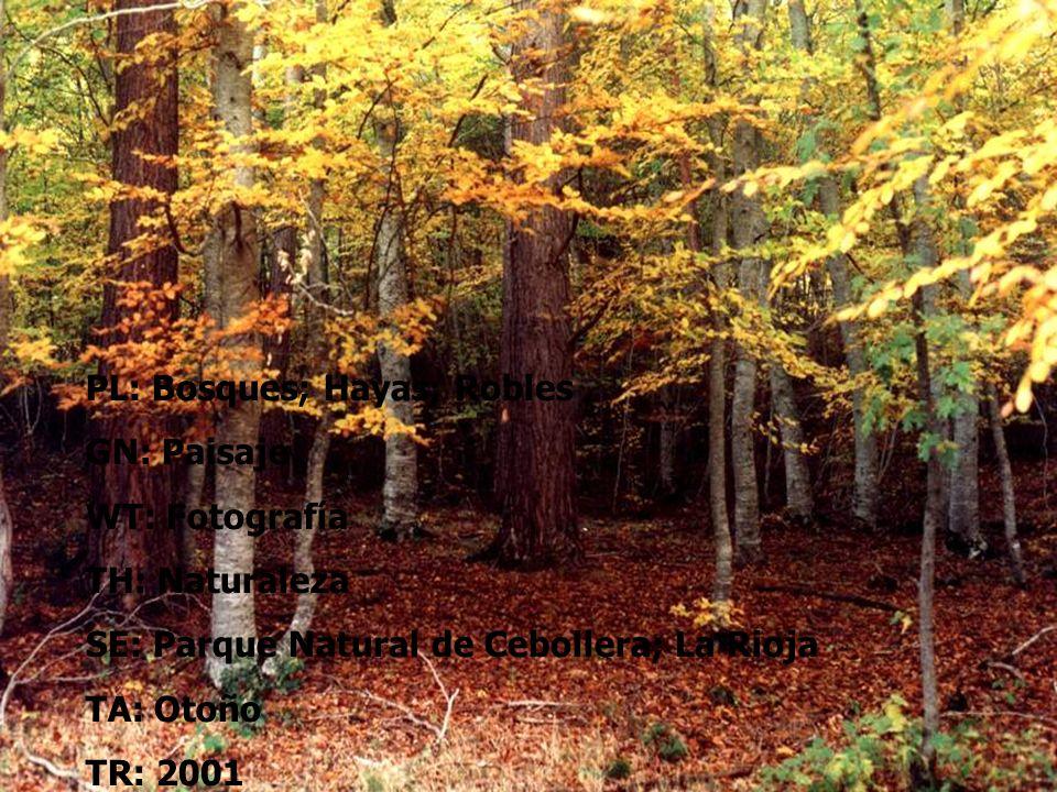 PL: Bosques; Hayas; Robles GN: Paisaje WT: Fotografía TH: Naturaleza SE: Parque Natural de Cebollera; La Rioja TA: Otoño TR: 2001