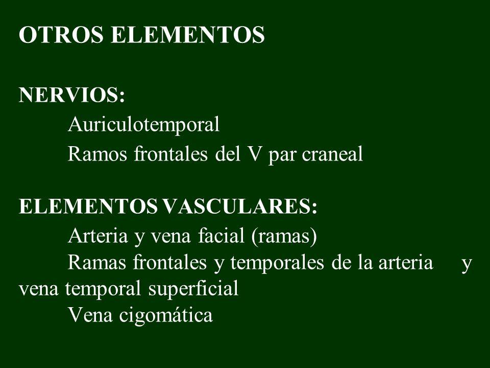 OTROS ELEMENTOS NERVIOS: Auriculotemporal Ramos frontales del V par craneal ELEMENTOS VASCULARES: Arteria y vena facial (ramas) Ramas frontales y temp