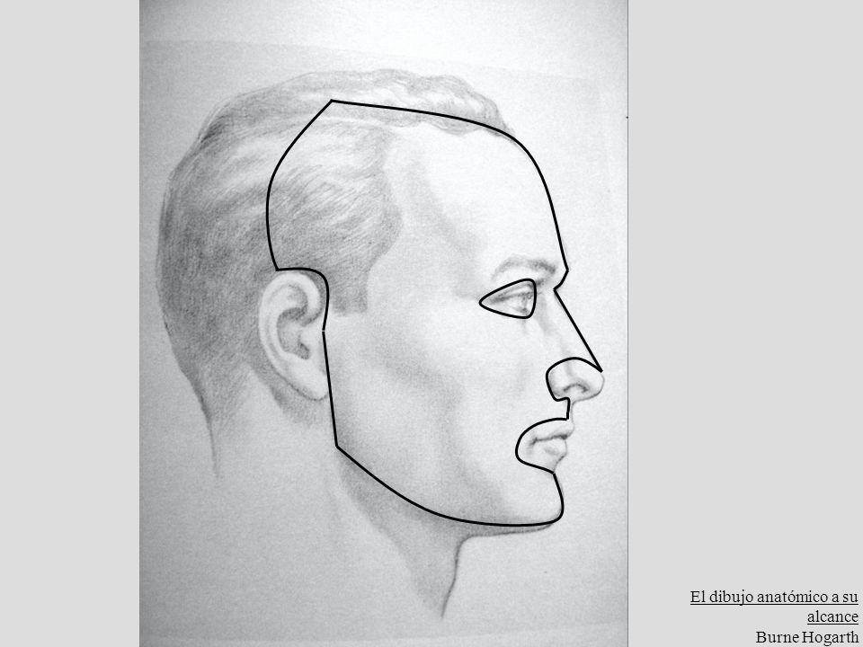 El dibujo anatómico a su alcance Burne Hogarth