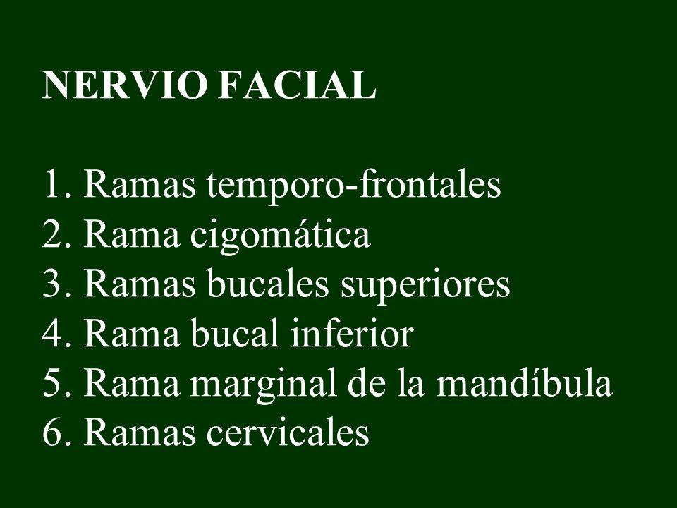 NERVIO FACIAL 1. Ramas temporo-frontales 2. Rama cigomática 3. Ramas bucales superiores 4. Rama bucal inferior 5. Rama marginal de la mandíbula 6. Ram