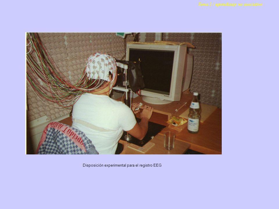 Disposición experimental para el registro EEG