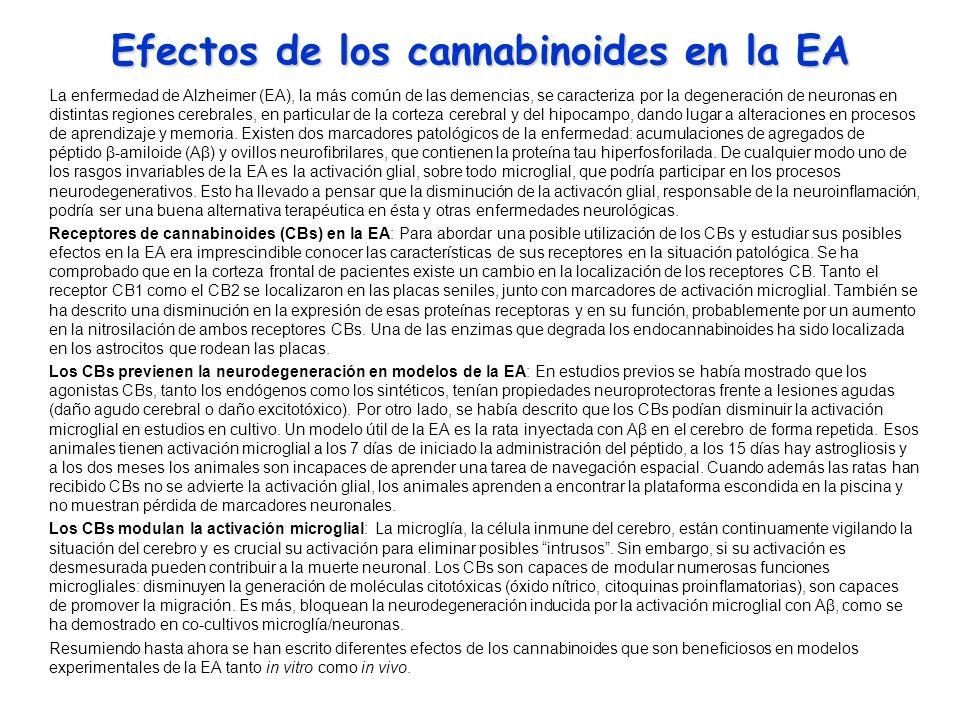 Efectos de los cannabinoides en la EA La enfermedad de Alzheimer (EA), la más común de las demencias, se caracteriza por la degeneración de neuronas e