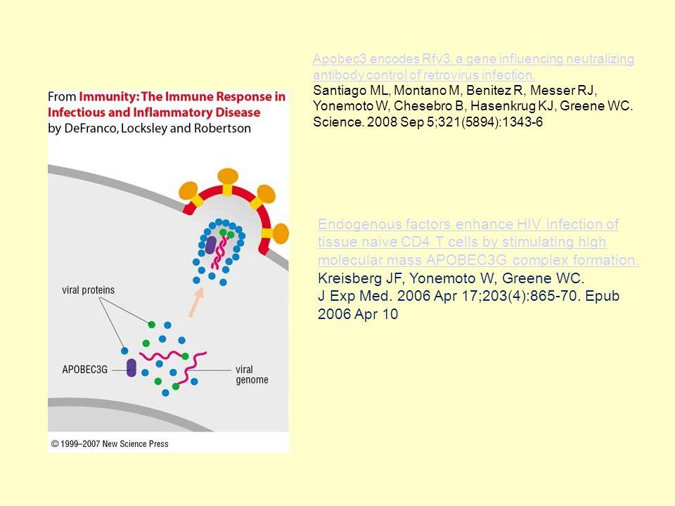 Apobec3 encodes Rfv3, a gene influencing neutralizing antibody control of retrovirus infection. Santiago ML, Montano M, Benitez R, Messer RJ, Yonemoto