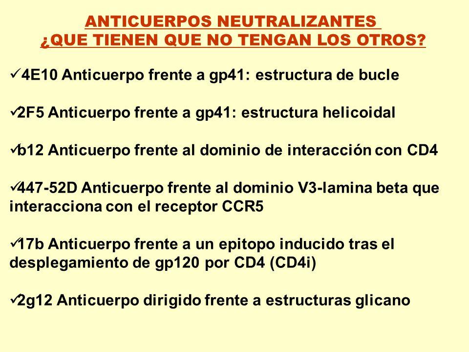 ANTICUERPOS NEUTRALIZANTES ¿QUE TIENEN QUE NO TENGAN LOS OTROS? 4E10 Anticuerpo frente a gp41: estructura de bucle 2F5 Anticuerpo frente a gp41: estru