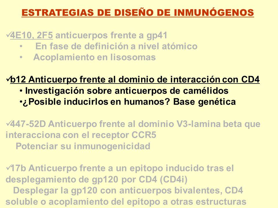ESTRATEGIAS DE DISEÑO DE INMUNÓGENOS 4E10, 2F5 anticuerpos frente a gp41 En fase de definición a nivel atómico Acoplamiento en lisosomas b12 Anticuerp