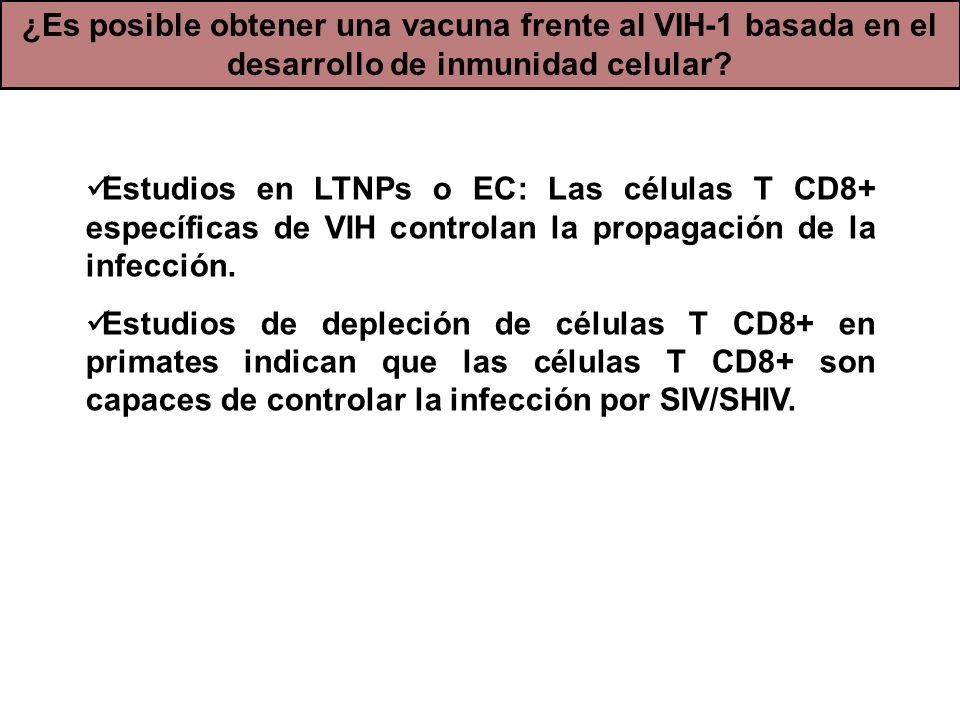 Estudios en LTNPs o EC: Las células T CD8+ específicas de VIH controlan la propagación de la infección. Estudios de depleción de células T CD8+ en pri