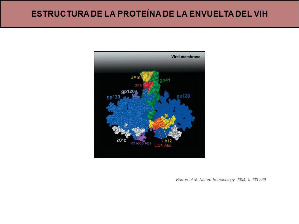 ESTRUCTURA DE LA PROTEÍNA DE LA ENVUELTA DEL VIH Burton et al. Nature Immunology 2004; 5:233-236