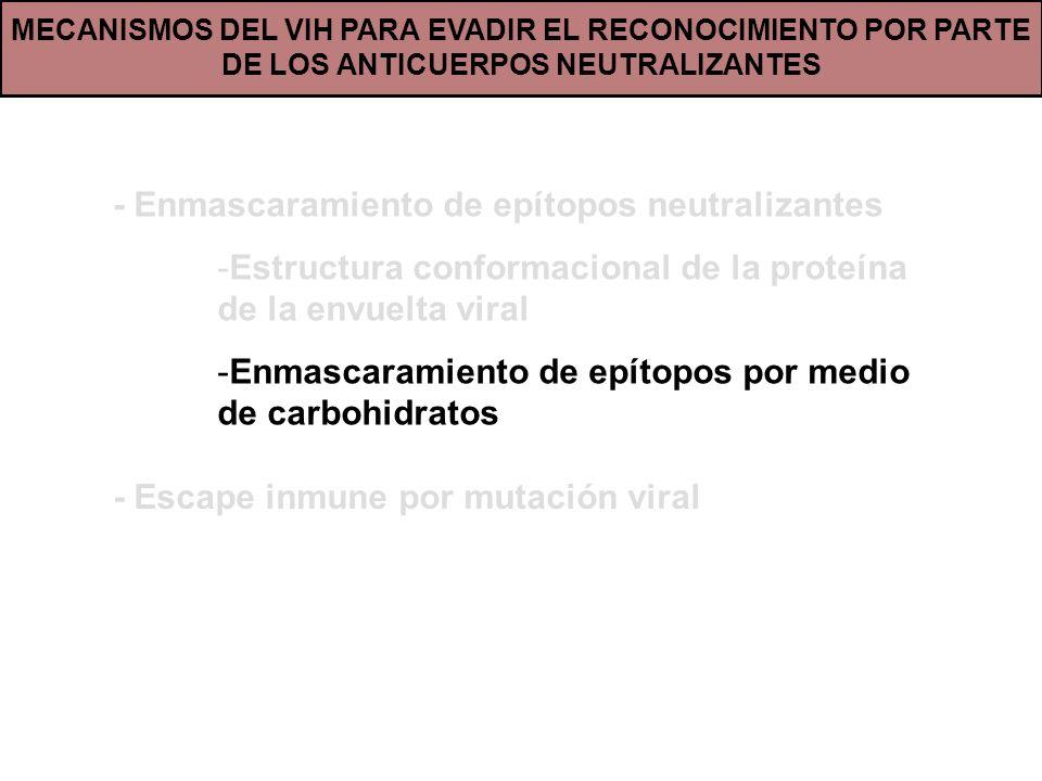 MECANISMOS DEL VIH PARA EVADIR EL RECONOCIMIENTO POR PARTE DE LOS ANTICUERPOS NEUTRALIZANTES - Enmascaramiento de epítopos neutralizantes -Estructura