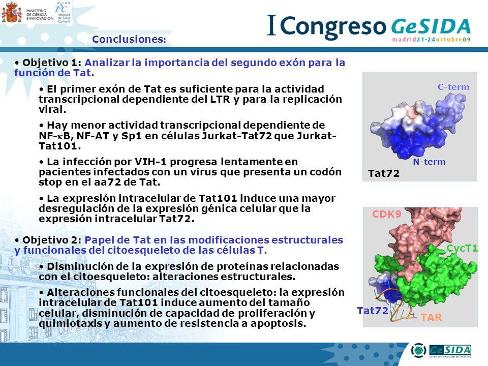 Conclusiones: Objetivo 1: Analizar la importancia del segundo exón para la función de Tat.