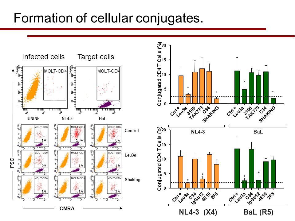 NL4-3 (X4)BaL (R5) Ctrl + Leu3a C34 IgGb12 4E10 2F5 Ctrl + Leu3a C34 IgGb12 4E10 2F5 * * * * 0 5 10 15 20 Conjugated CD4 T Cells (%) Control Leu3a Sha