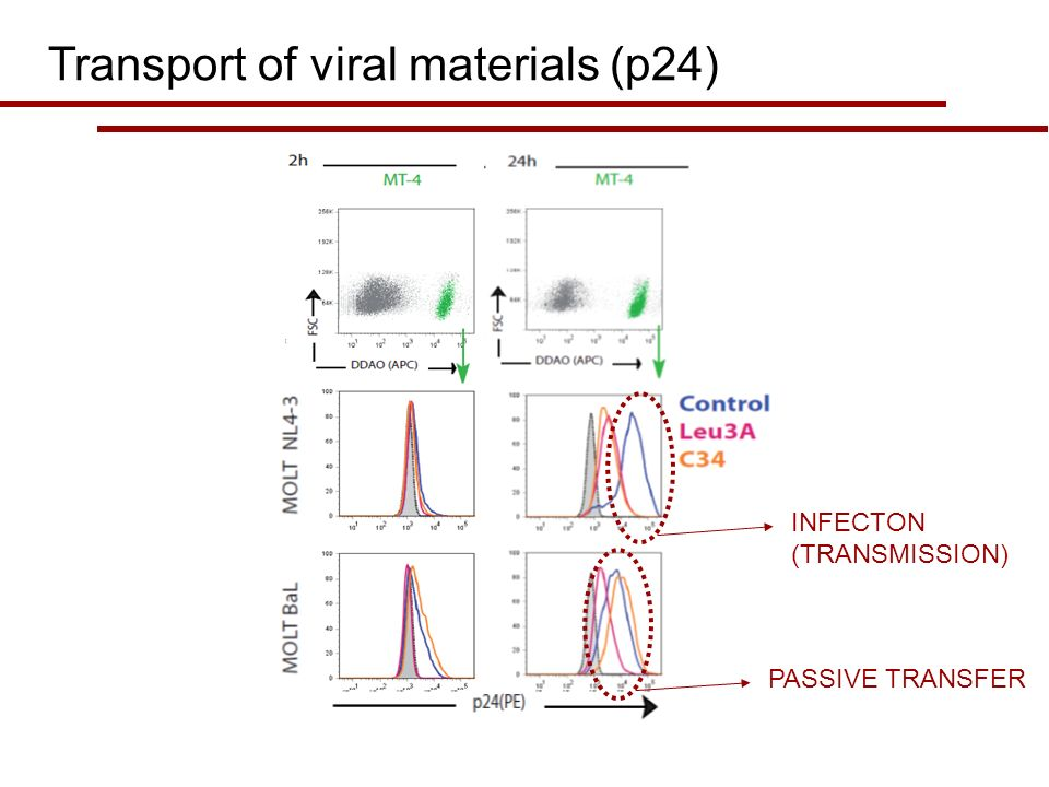 Transport of viral materials (p24) INFECTON (TRANSMISSION) PASSIVE TRANSFER