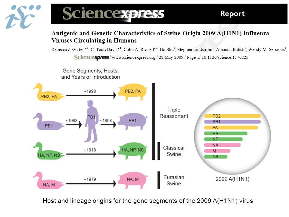 Host and lineage origins for the gene segments of the 2009 A(H1N1) virus