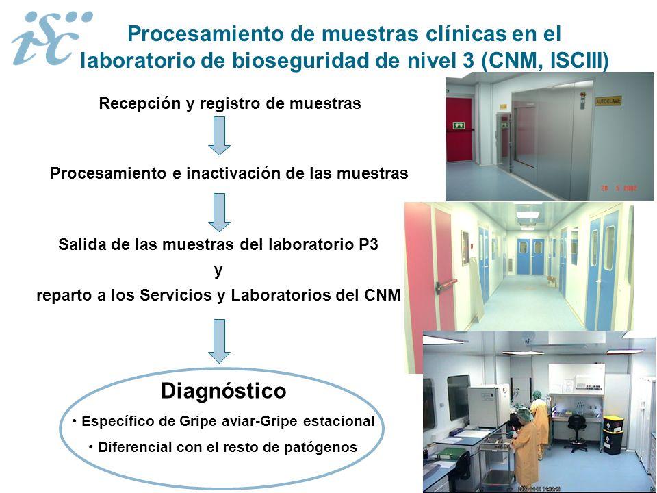 Procesamiento de muestras clínicas en el laboratorio de bioseguridad de nivel 3 (CNM, ISCIII) Recepción y registro de muestras Procesamiento e inactiv