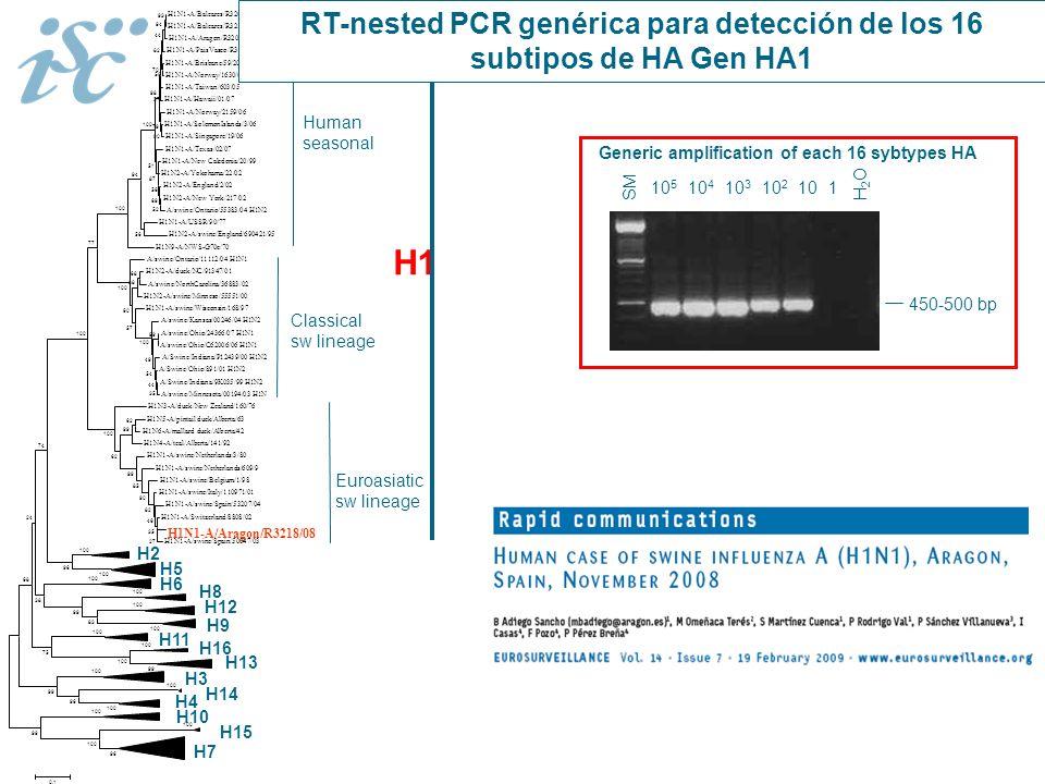 H1 H2 H3 H4 H5 H6 H7 H8 H9 H10 H11 H12 H13 H14 H15 H16 H1N1-A/Baleares/R3205/08 H1N1-A/Baleares/R3210/08 H1N1-A/Aragon/R3207/08 H1N1-A/PaisVasco/R3174