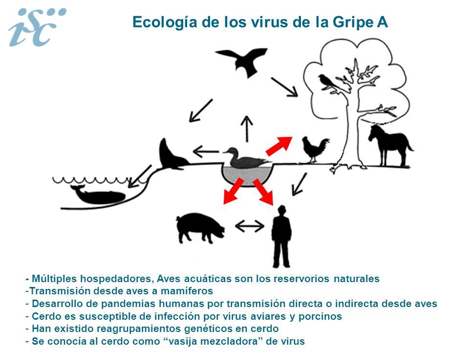 - Múltiples hospedadores, Aves acuáticas son los reservorios naturales -Transmisión desde aves a mamíferos - Desarrollo de pandemias humanas por trans